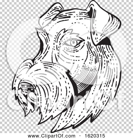 Transparent clip art background preview #COLLC1620315