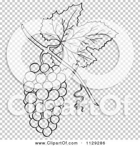 Transparent clip art background preview #COLLC1129286