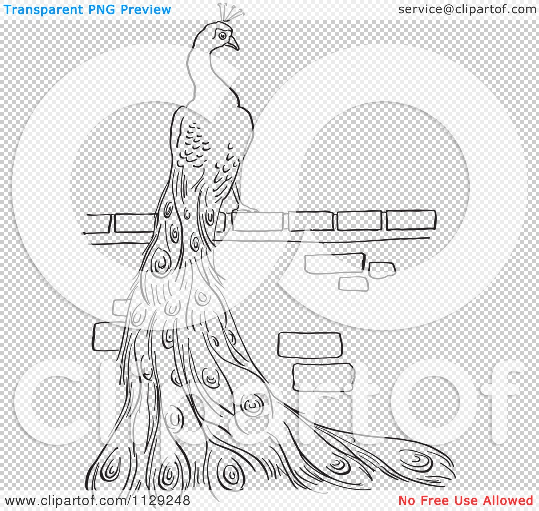 cartoon clipart of an outlined peacock on a brick wall black and