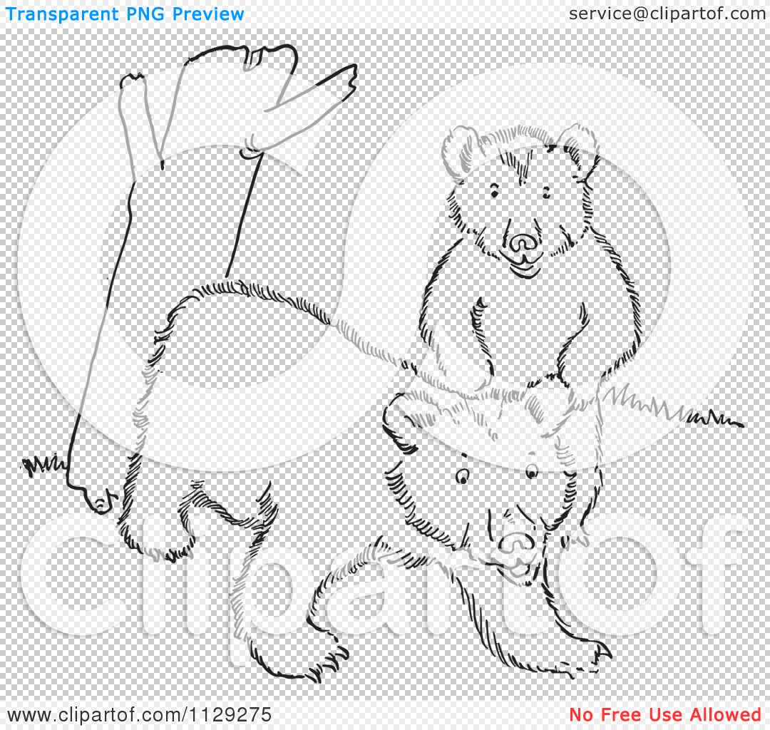 forest grove colouring pages