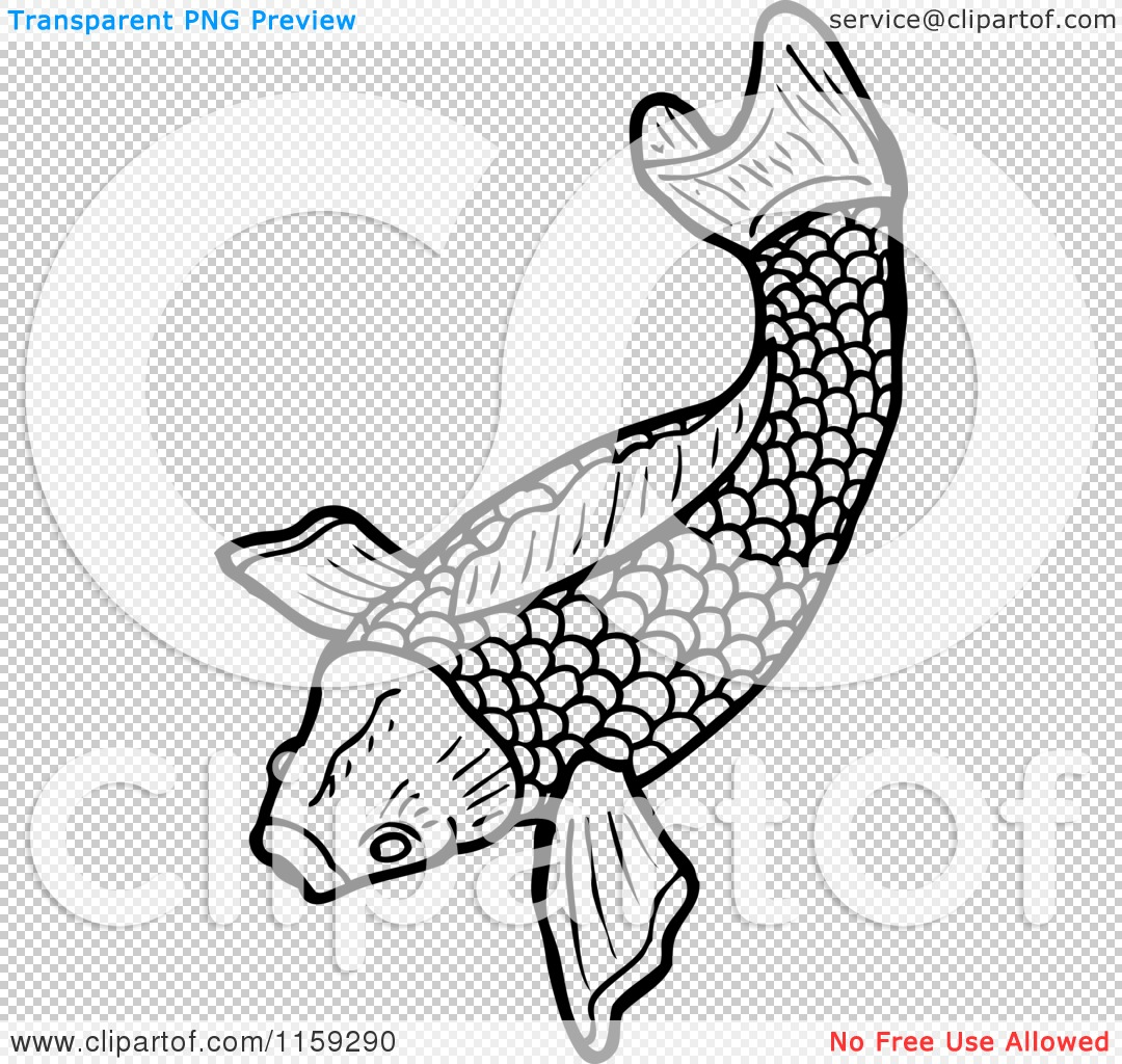 Cartoon of a black and white koi fish royalty free for Black and white koi fish
