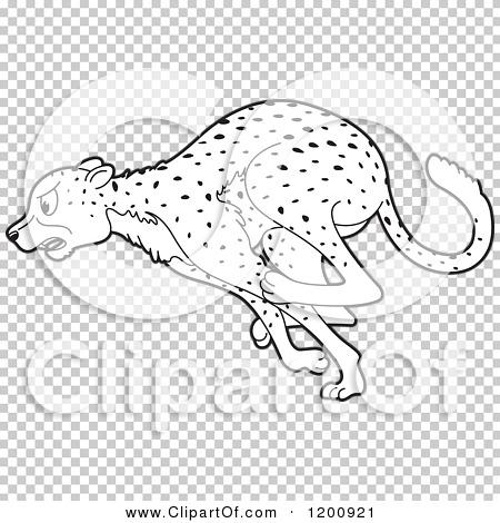 Transparent clip art background preview #COLLC1200921