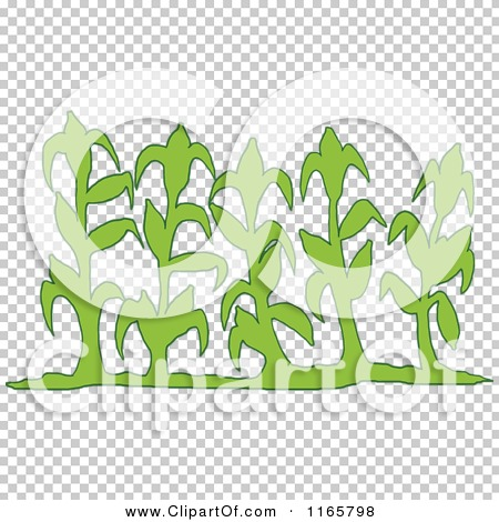 Transparent clip art background preview #COLLC1165798