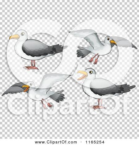 Transparent clip art background preview #COLLC1165254