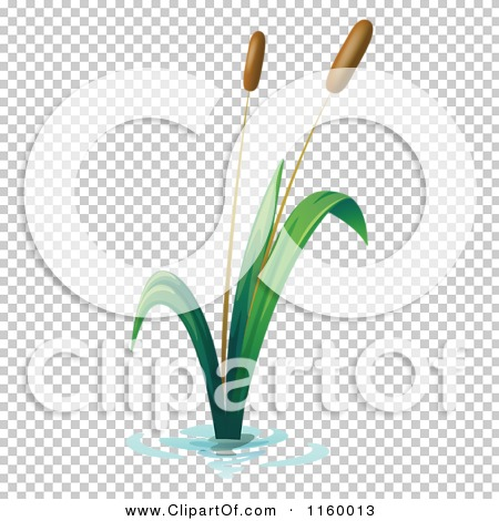 Transparent clip art background preview #COLLC1160013