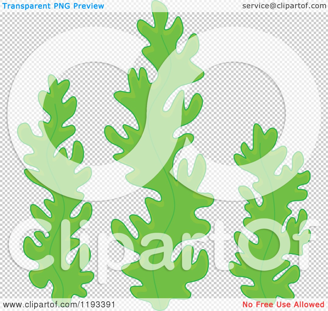 Cartoon Seaweed Clipart PNG file has a