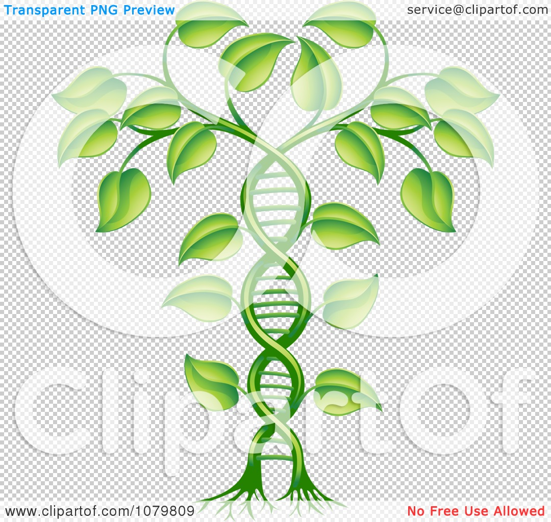 Clipart 3d Green DNA Crop Gene Modification Helix Plant - Royalty Free ...