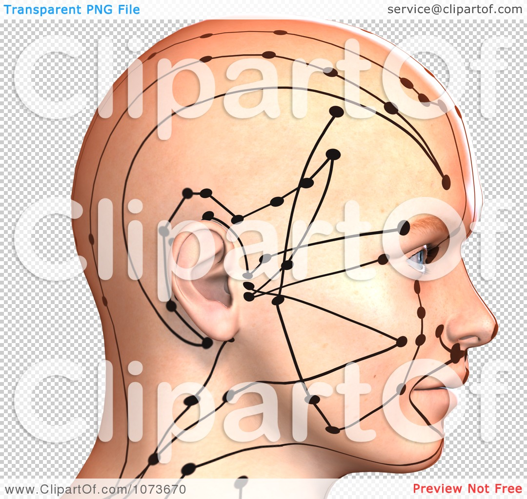 Clipart 3d Male Acupressure Chart Head 5 - Royalty Free ...