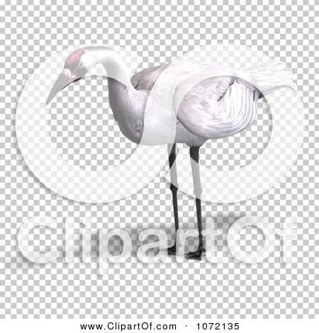 Transparent clip art background preview #COLLC1072135