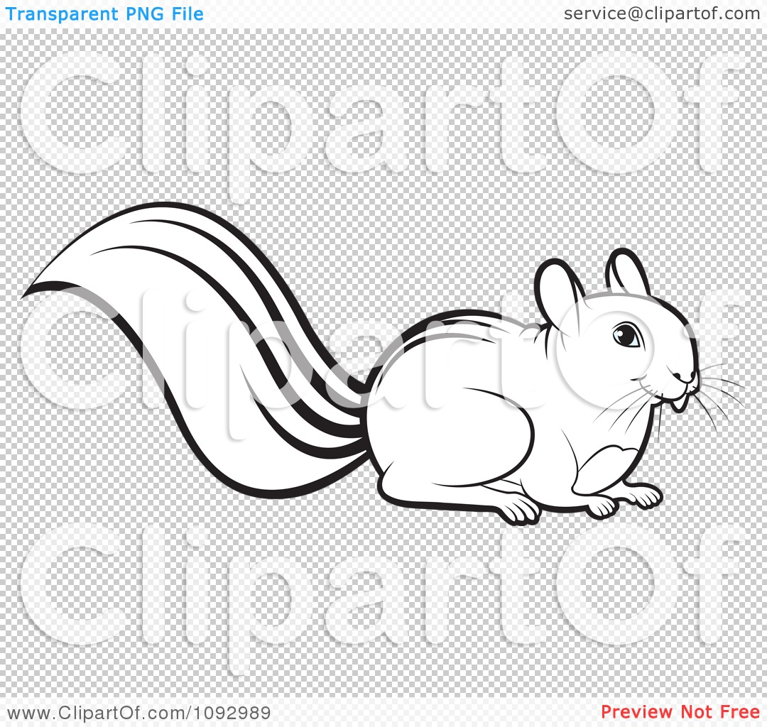 Squirrel Clipart Black And White