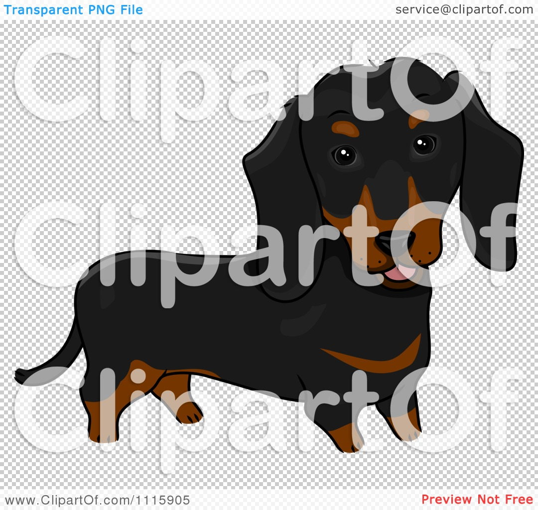 Cute Black And Brown Dachshund Dog - Royalty Free Vector Illustration