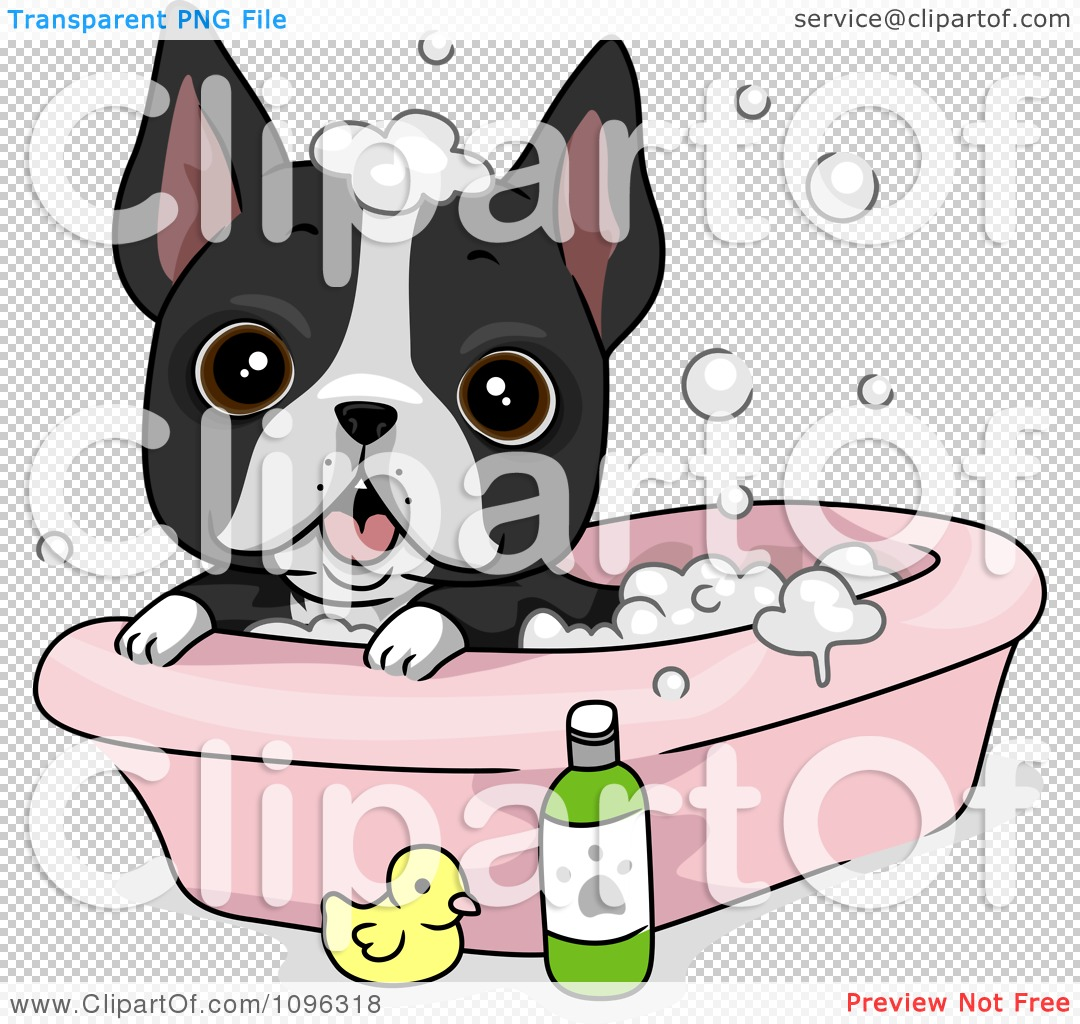 Clipart Cute Boston Terrier Puppy Dog Bathing - Royalty Free ...