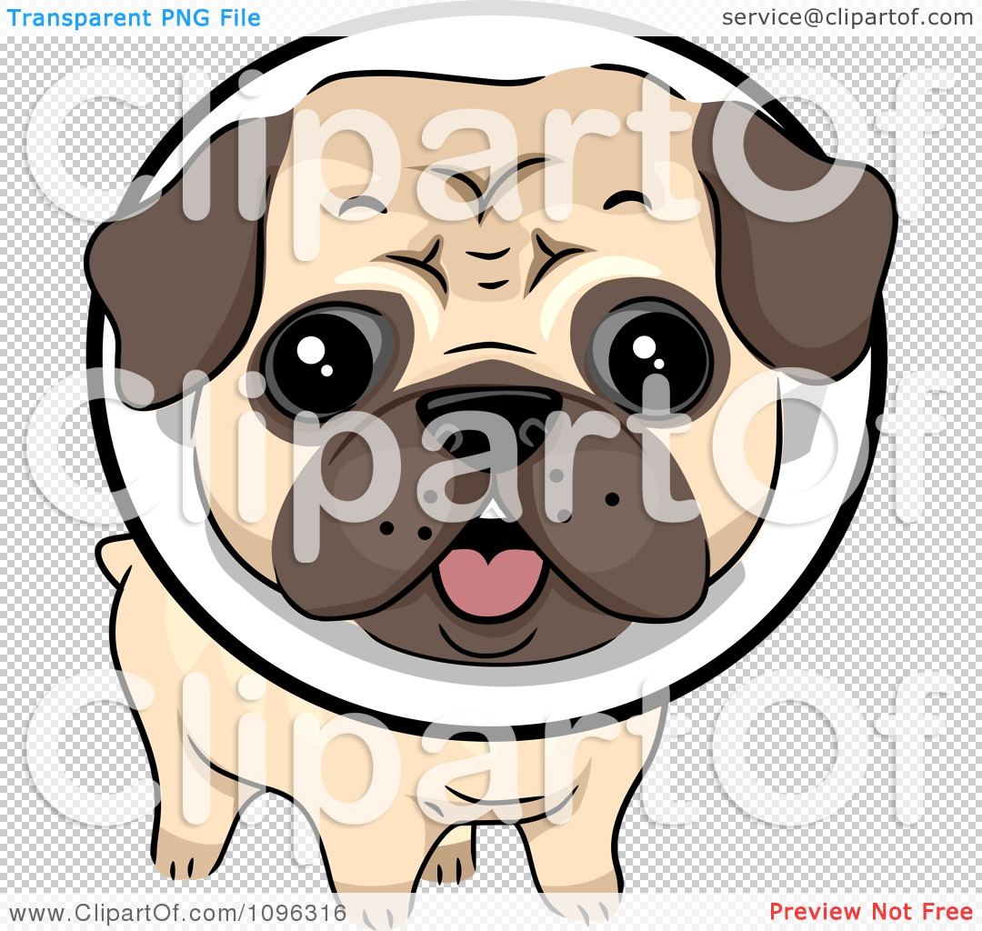 Clipart Cute Pug Dog Wearing A Protective Elizabethan