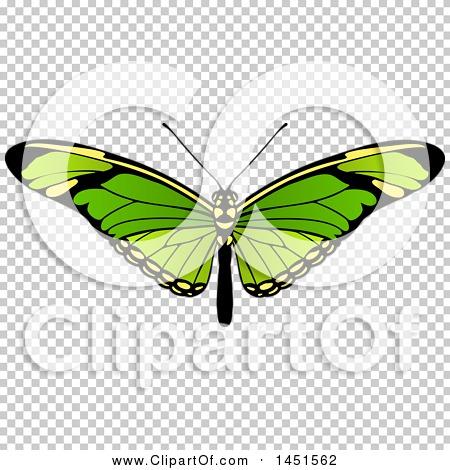 Transparent clip art background preview #COLLC1451562