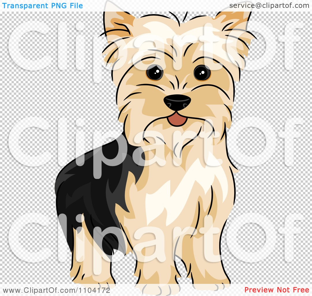 Yorkie Dog Royalty Free Vector Illustration By BNP Design Studio