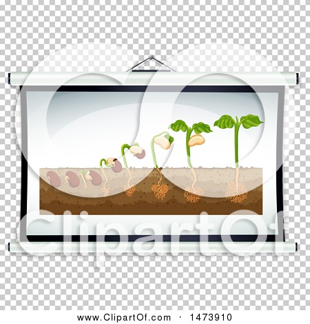 Transparent clip art background preview #COLLC1473910