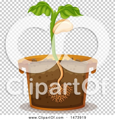 Transparent clip art background preview #COLLC1473919