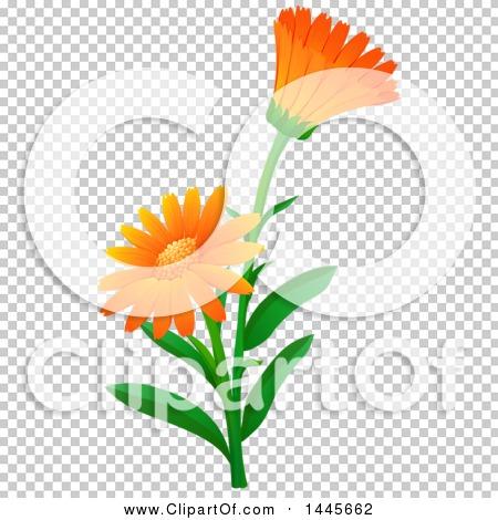 Orange Daisy Clip Art