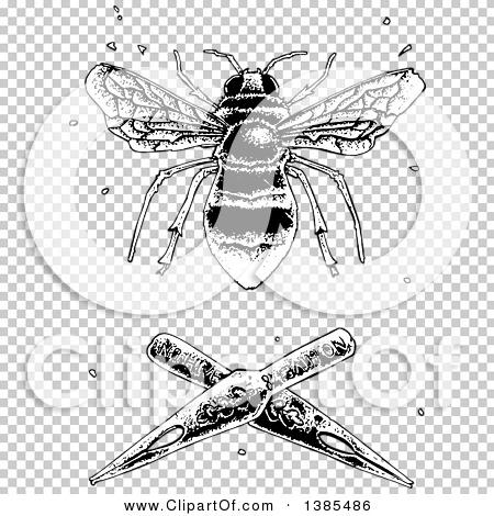 Transparent clip art background preview #COLLC1385486