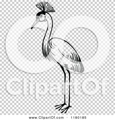 Transparent clip art background preview #COLLC1180185