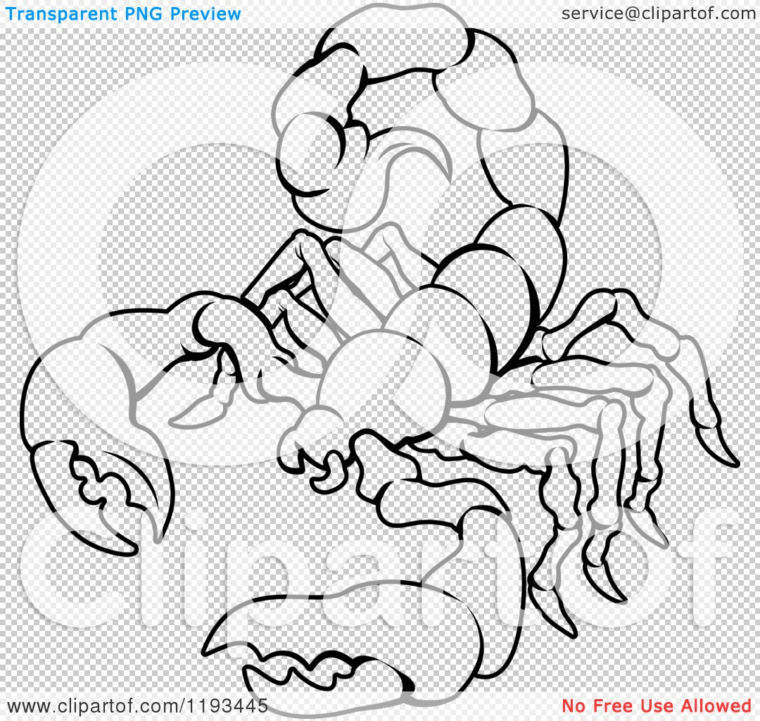 Zodiac Line Drawing : Clipart of a black and white line drawing the scorpio