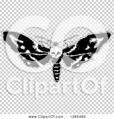 Transparent clip art background preview #COLLC1385485