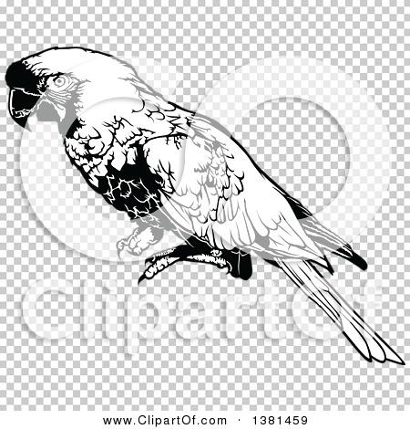 Transparent clip art background preview #COLLC1381459