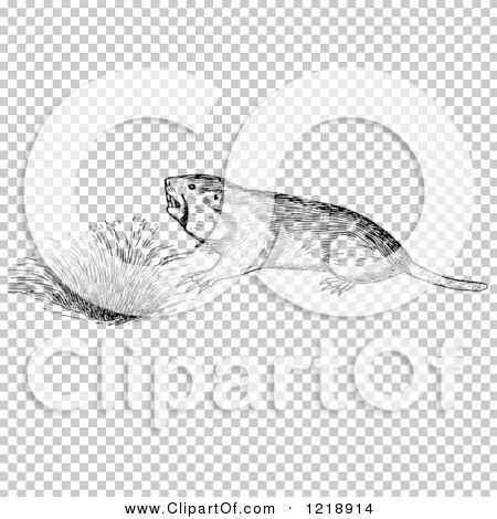 Transparent clip art background preview #COLLC1218914
