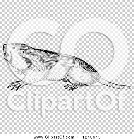 Transparent clip art background preview #COLLC1218915