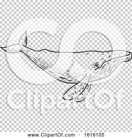 Transparent clip art background preview #COLLC1616105