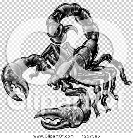 Transparent clip art background preview #COLLC1257385