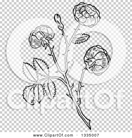 Transparent clip art background preview #COLLC1335007