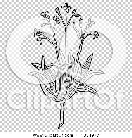Transparent clip art background preview #COLLC1334977