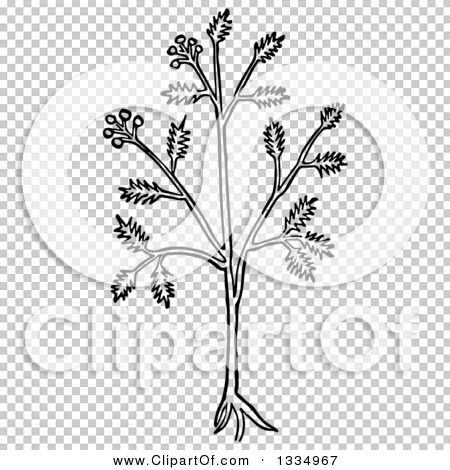 Transparent clip art background preview #COLLC1334967