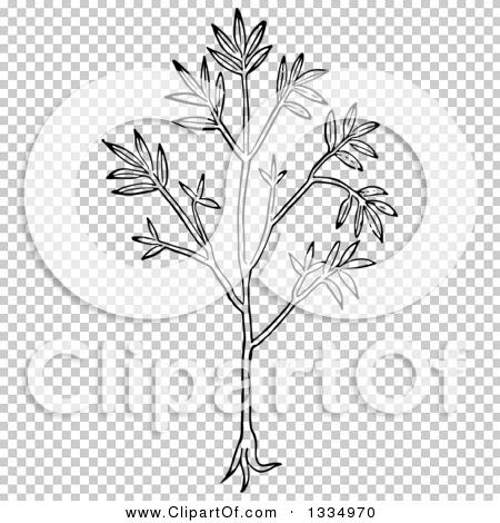 Transparent clip art background preview #COLLC1334970
