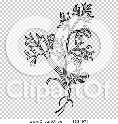 Transparent clip art background preview #COLLC1334971