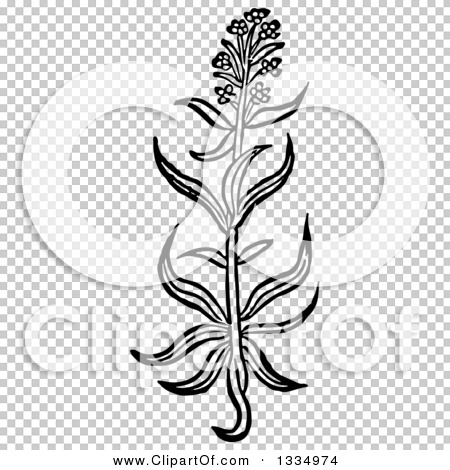Transparent clip art background preview #COLLC1334974