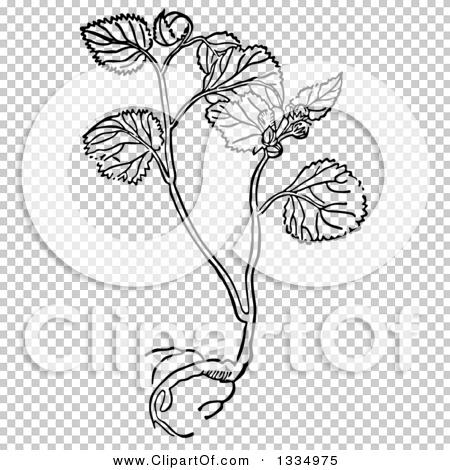 Transparent clip art background preview #COLLC1334975