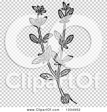Transparent clip art background preview #COLLC1334952