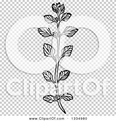 Transparent clip art background preview #COLLC1334980