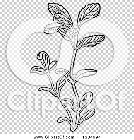 Transparent clip art background preview #COLLC1334994
