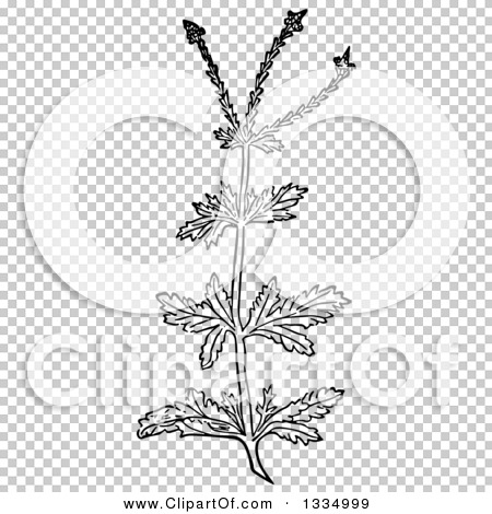 Transparent clip art background preview #COLLC1334999