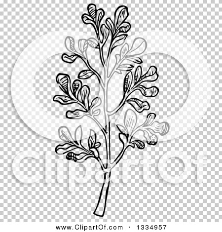 Transparent clip art background preview #COLLC1334957