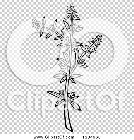 Transparent clip art background preview #COLLC1334960