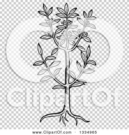 Transparent clip art background preview #COLLC1334965