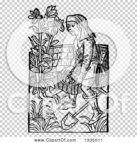 Transparent clip art background preview #COLLC1335011