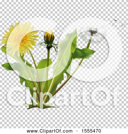Transparent clip art background preview #COLLC1555470