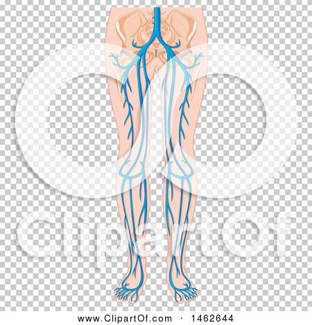 Transparent clip art background preview #COLLC1462644