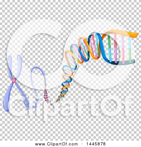 Transparent clip art background preview #COLLC1445878