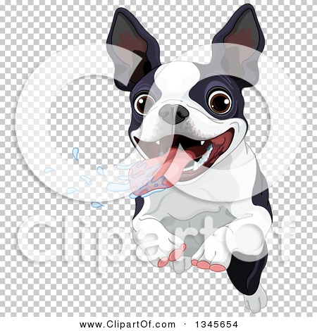 Transparent clip art background preview #COLLC1345654